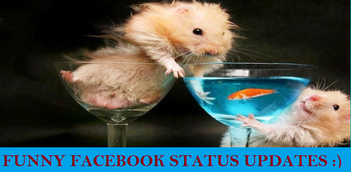 FUNNY FACEBOOK STATUS UPDATES FB STATUS