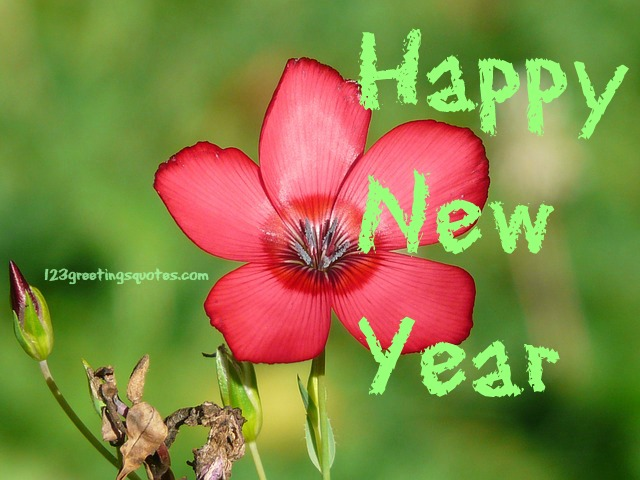 happy new year 2016 whatsapp profile pic