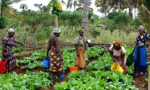 International Day of Rural Women theme