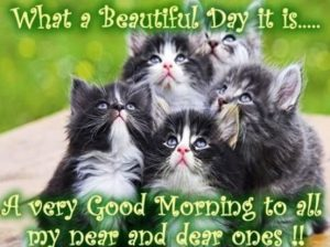 Cat Good Morning Messages SMS