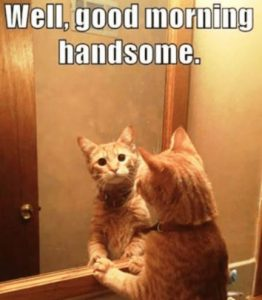 Funny Cat Good Morning Images