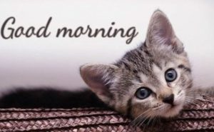 Nice Cat Good Morning Pic Messages SMS