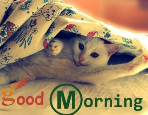 Pretty Cat Good Morning Picture